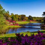 Få farve i haven og hjemmet